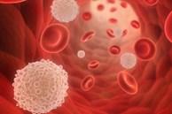 Tế bào bạch cầu bảo vệ cơ thể như thế nào?