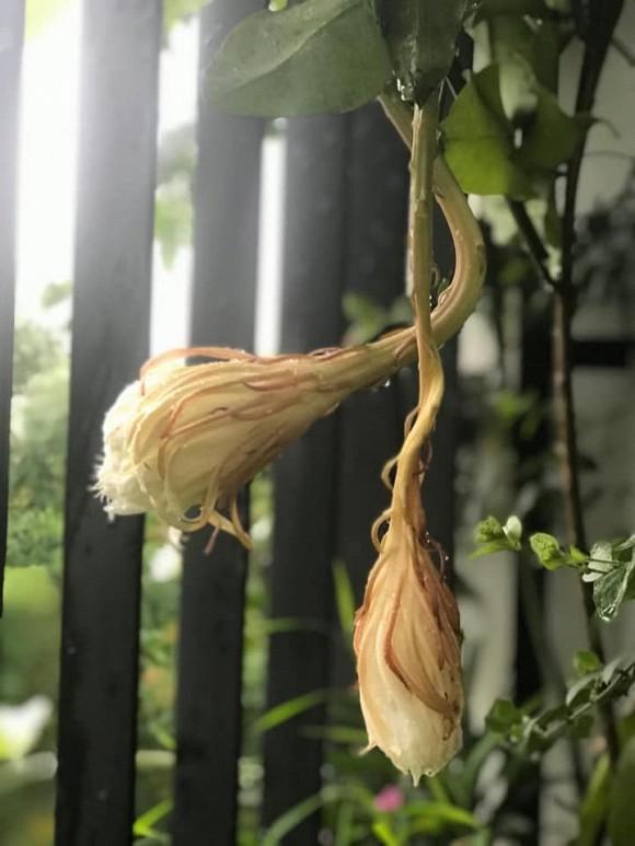 Khu vườn ngập tràn sắc hoa của cựu thành viên nhóm nhạc Con gái - Xuân Nhị-11