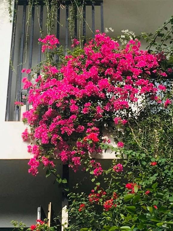 Khu vườn ngập tràn sắc hoa của cựu thành viên nhóm nhạc Con gái - Xuân Nhị-12
