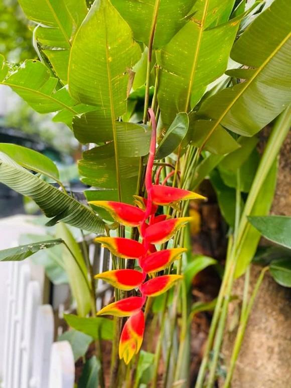 Khu vườn ngập tràn sắc hoa của cựu thành viên nhóm nhạc Con gái - Xuân Nhị-14