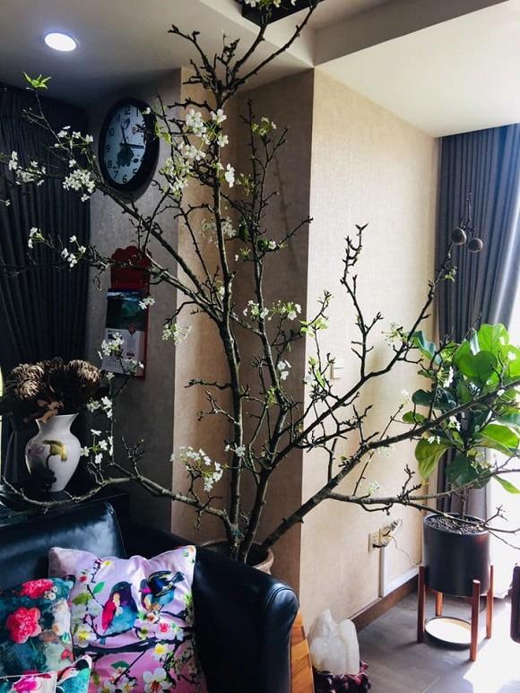Khu vườn ngập tràn sắc hoa của cựu thành viên nhóm nhạc Con gái - Xuân Nhị-19