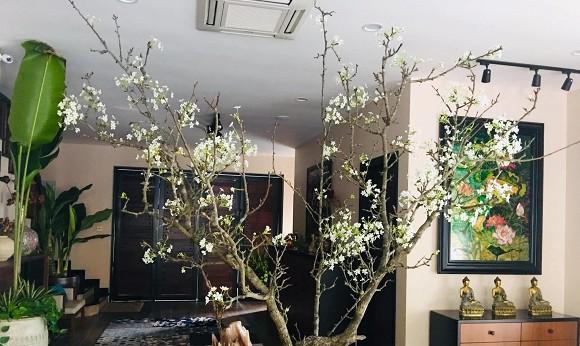 Khu vườn ngập tràn sắc hoa của cựu thành viên nhóm nhạc Con gái - Xuân Nhị-20