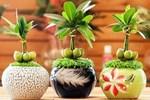 Những loại cây may mắn đặt trên bàn thờ, gia chủ làm gì cũng hanh thông-7