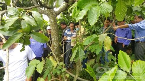 Truy tố người đàn bà giết 3 bà cháu dã man ở Lâm Đồng-3