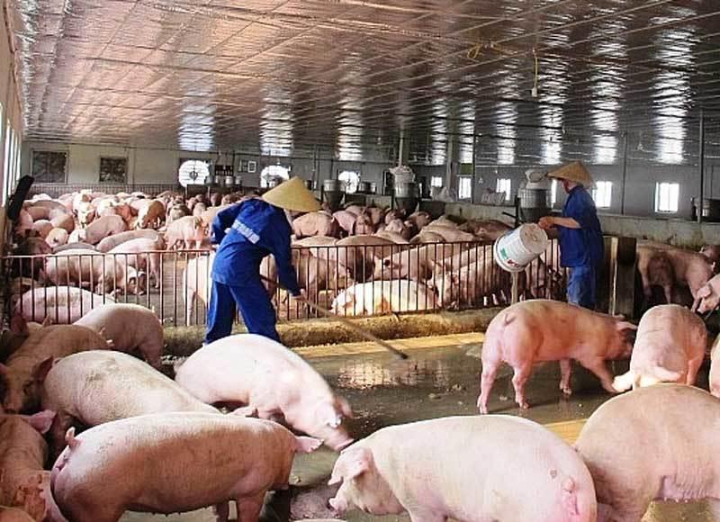 Tăng giá bất chấp cảnh báo, thịt lợn đắt đỏ chưa từng có-1