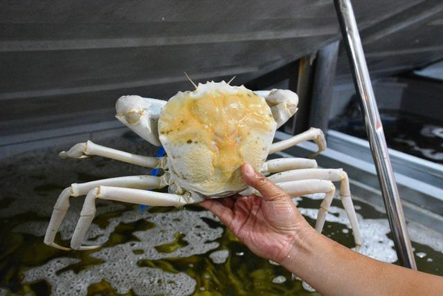 Loài cua trắng bóc, to tướng, thịt vô cùng thơm ngon hút hồn bà nội trợ Việt-1