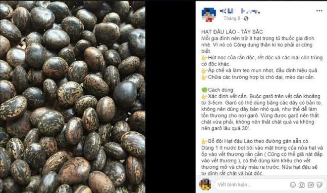 Sự thật về hạt đậu Lào có giá cắt cổ vẫn được nhiều người lùng mua-1