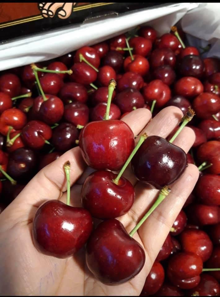 Hết thời giá rẻ, nhà giàu Việt ăn cherry Mỹ 1 triệu/kg-1