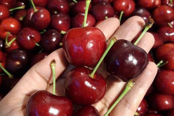 Cherry Mỹ tăng 1 triệu/kg vẫn hút nhà giàu Việt