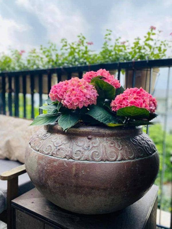 Nữ ca sĩ lấy chồng rút khỏi showbiz, về ngoại thành mua biệt thự trồng hoa, cây cảnh-10
