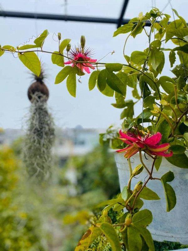 Nữ ca sĩ lấy chồng rút khỏi showbiz, về ngoại thành mua biệt thự trồng hoa, cây cảnh-11
