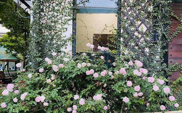 Nữ ca sĩ lấy chồng rút khỏi showbiz, về ngoại thành mua biệt thự trồng hoa, cây cảnh-9