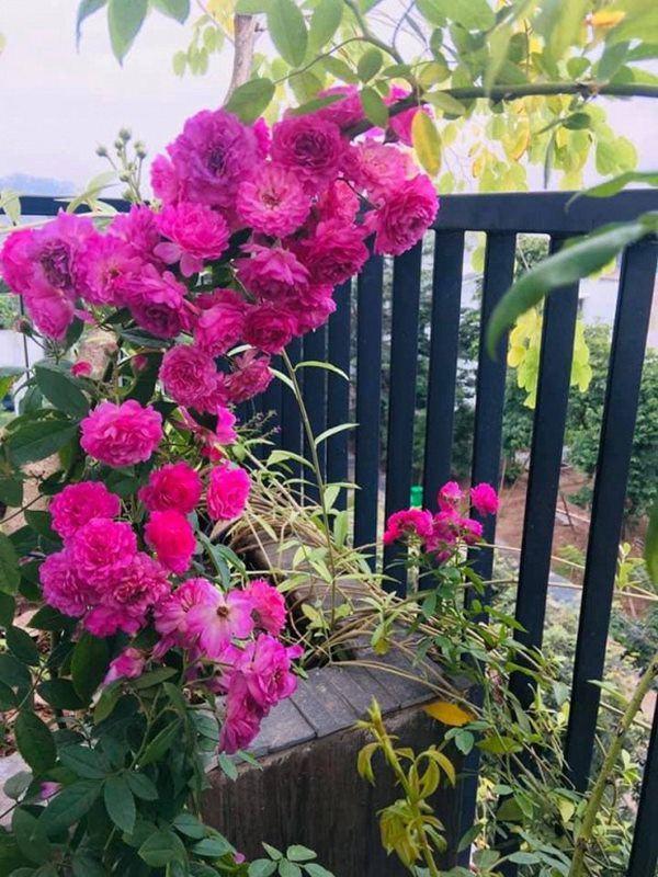 Nữ ca sĩ lấy chồng rút khỏi showbiz, về ngoại thành mua biệt thự trồng hoa, cây cảnh-12