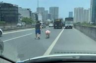 Chú lợn quyết tâm đào tẩu khỏi xe vận chuyển để chạy bộ khiến tài xế được 1 phen tập thể dục giữa trời nắng nóng