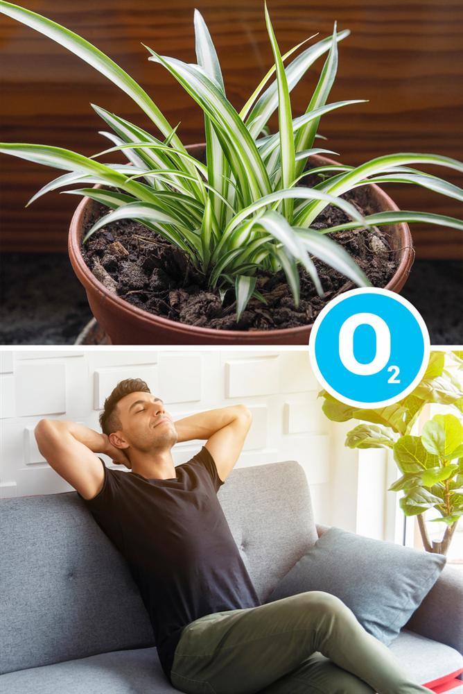 Gợi ý 15 loại cây cảnh bạn nên trồng để vừa làm đẹp nhà vừa tốt cho sức khỏe-2
