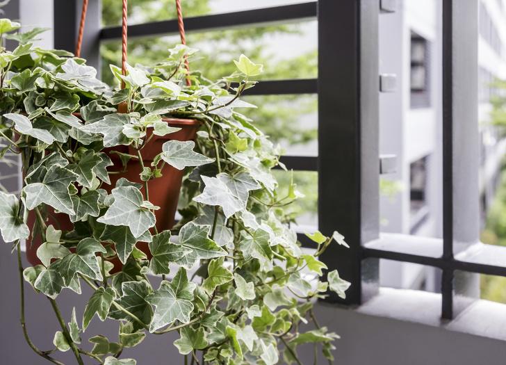 Gợi ý 15 loại cây cảnh bạn nên trồng để vừa làm đẹp nhà vừa tốt cho sức khỏe-6