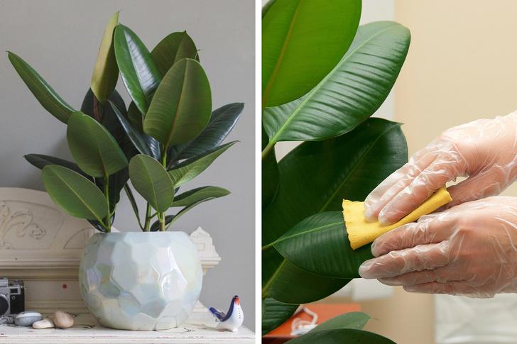 Gợi ý 15 loại cây cảnh bạn nên trồng để vừa làm đẹp nhà vừa tốt cho sức khỏe-10