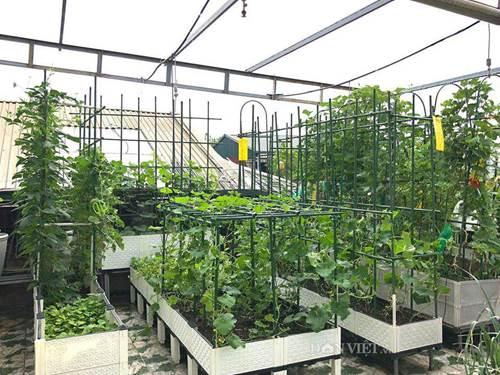 Ngất ngây với khu vườn xanh mướt, lúc lỉu trái ngon trên sân thượng của mẹ đảm Hà thành-1