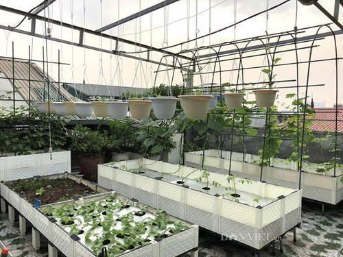 Ngất ngây với khu vườn xanh mướt, lúc lỉu trái ngon trên sân thượng của mẹ đảm Hà thành-2