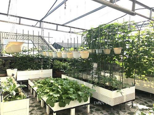 Ngất ngây với khu vườn xanh mướt, lúc lỉu trái ngon trên sân thượng của mẹ đảm Hà thành-4
