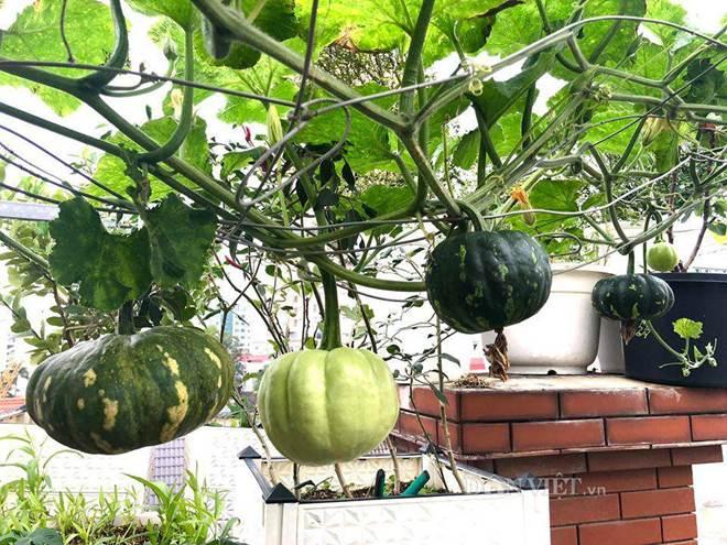 Ngất ngây với khu vườn xanh mướt, lúc lỉu trái ngon trên sân thượng của mẹ đảm Hà thành-9