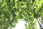 Khu vườn cổ tích với hơn 30 loại cây độc lạ của đôi vợ chồng trẻ-12