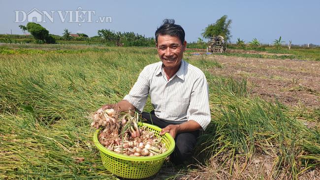 Nam Định: Đinh lăng giá rẻ như cho, từ cây làm giàu thành cây chết dở-3