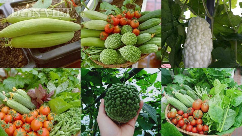 Vườn dưa lưới ở Hà Nội, chỉ 30m2 sân thượng mà mỗi năm thu 3 tạ dưa-8
