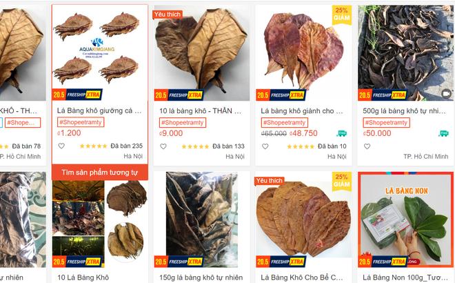 Chuyện thật như đùa, lá bàng khô được rao bán rầm rộ, giá 1.000 đồng/lá-1