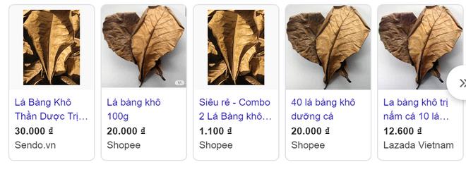 Chuyện thật như đùa, lá bàng khô được rao bán rầm rộ, giá 1.000 đồng/lá-2