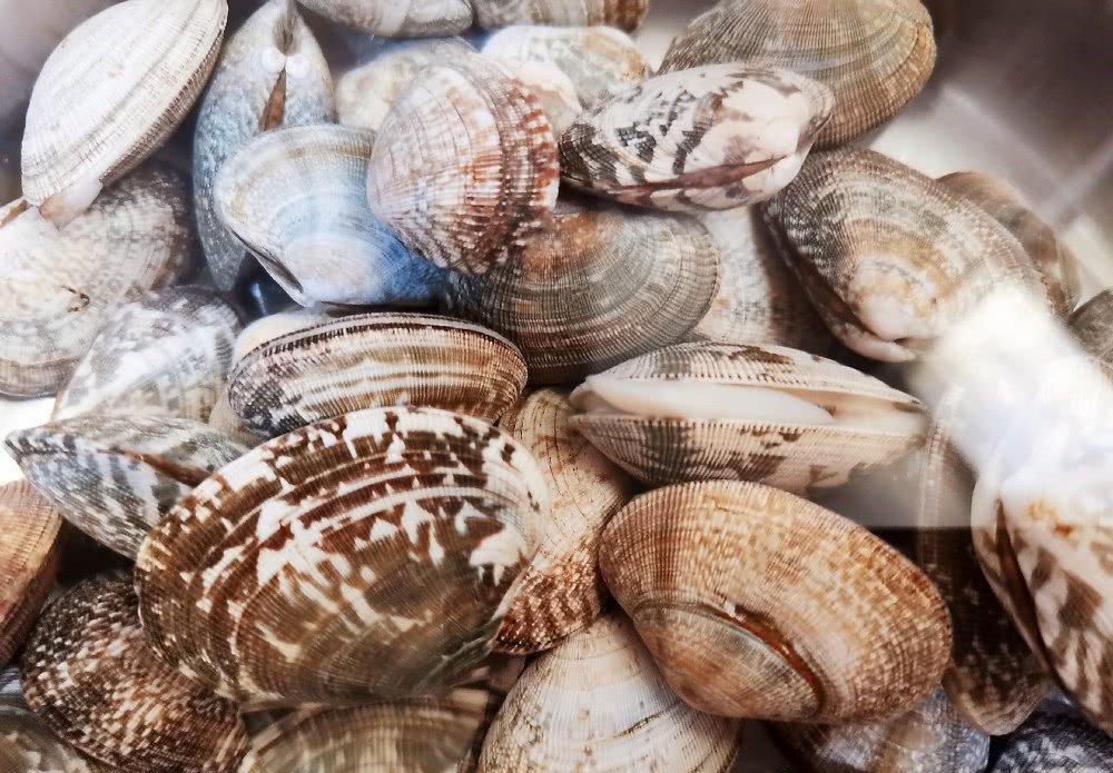 Ngoài muối, thêm vài giọt nguyên liệu này ngâm, ngao đảm bảo nhả sạch cát không còn một hạt-1