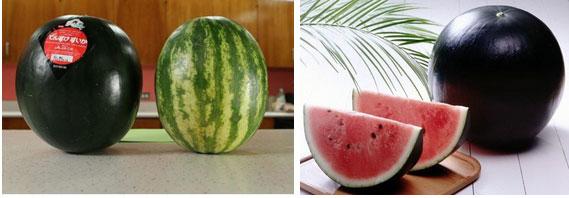 """Ai cũng sốc"""" khi nghe qua mức giá của 8 loại trái cây đắt nhất hành tinh này, bỏ ra hàng trăm triệu mới mua được là chuyện bình thường-2"""