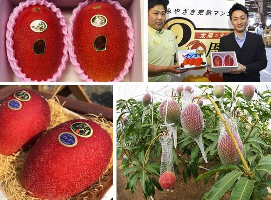 """Ai cũng sốc"""" khi nghe qua mức giá của 8 loại trái cây đắt nhất hành tinh này, bỏ ra hàng trăm triệu mới mua được là chuyện bình thường-5"""