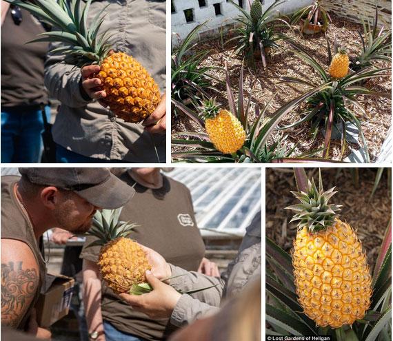 """Ai cũng sốc"""" khi nghe qua mức giá của 8 loại trái cây đắt nhất hành tinh này, bỏ ra hàng trăm triệu mới mua được là chuyện bình thường-6"""