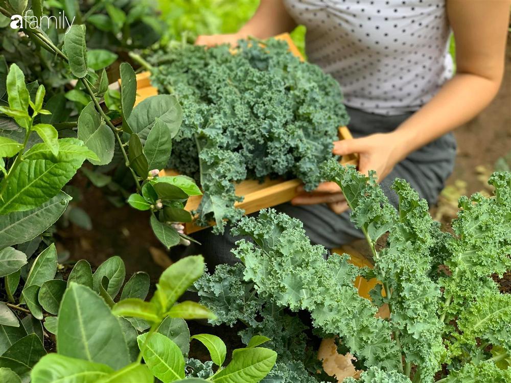 Bà mẹ trẻ ở Hà Nội chia sẻ kinh nghiệm trồng vườn treo Babylon ngay giữa lòng thành phố đã 10 năm vẫn xanh tốt-7