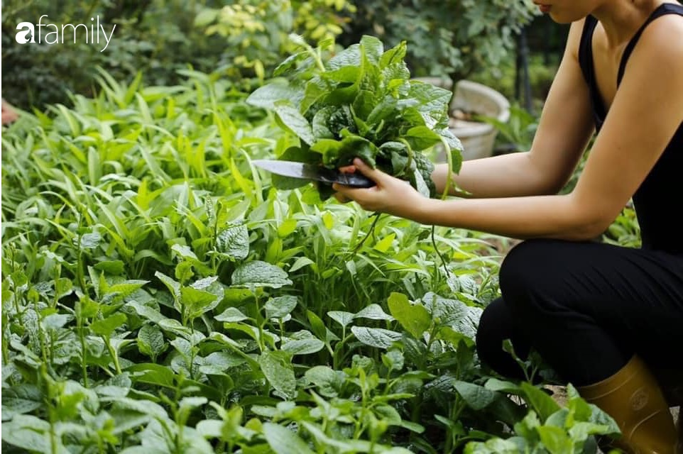 Bà mẹ trẻ ở Hà Nội chia sẻ kinh nghiệm trồng vườn treo Babylon ngay giữa lòng thành phố đã 10 năm vẫn xanh tốt-9