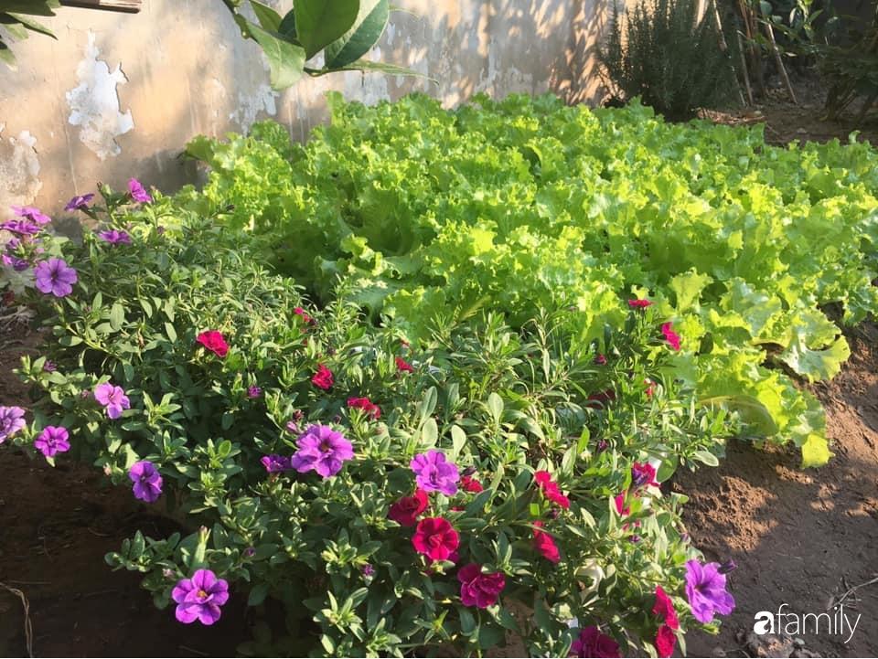 Bà mẹ trẻ ở Hà Nội chia sẻ kinh nghiệm trồng vườn treo Babylon ngay giữa lòng thành phố đã 10 năm vẫn xanh tốt-15