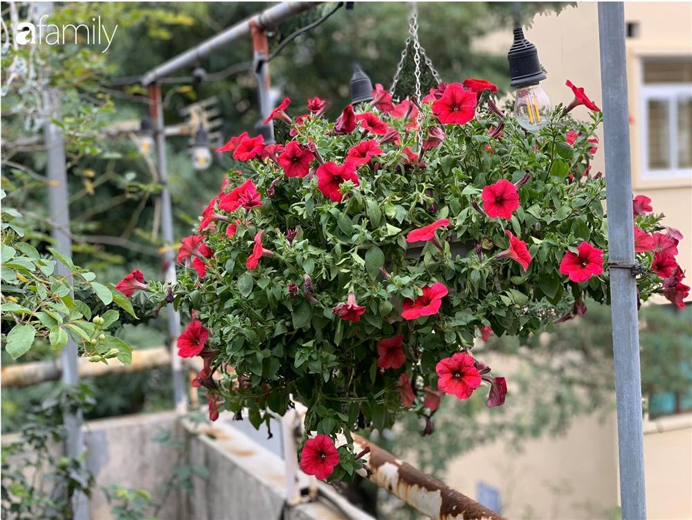 Bà mẹ trẻ ở Hà Nội chia sẻ kinh nghiệm trồng vườn treo Babylon ngay giữa lòng thành phố đã 10 năm vẫn xanh tốt-17