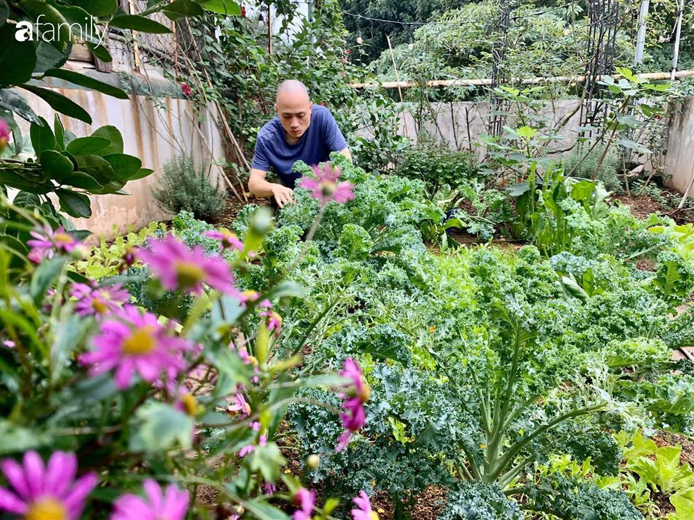 Bà mẹ trẻ ở Hà Nội chia sẻ kinh nghiệm trồng vườn treo Babylon ngay giữa lòng thành phố đã 10 năm vẫn xanh tốt-21
