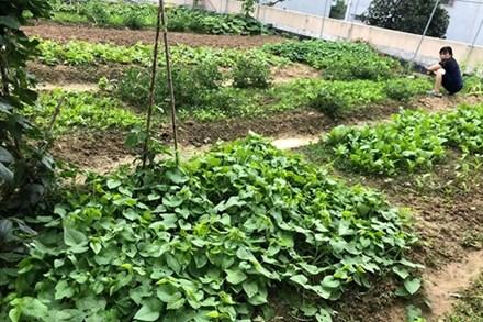"""Mẹ đảm 8x ở Bắc Giang đổ đất làm vườn trên sân thượng """"tốt như nông trại"""""""