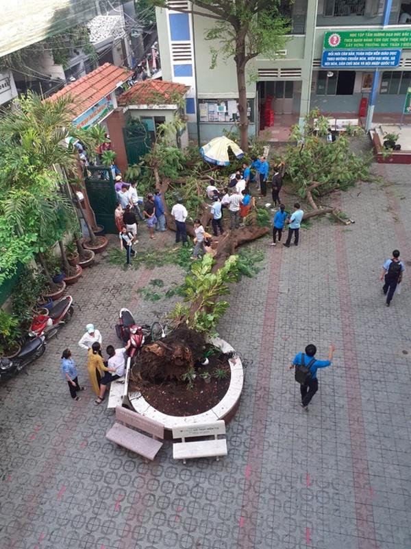 Nhân chứng vụ cây đổ khiến nhiều học sinh thương vong: Nghe tiếng cây đổ rầm rất to, sau đó có nhiều cháu học sinh kêu la thảm thiết-1