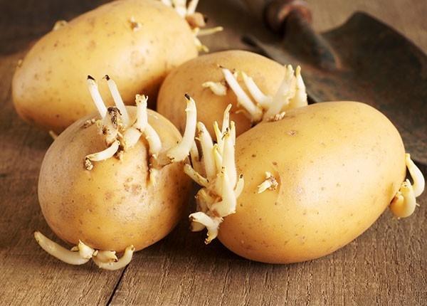 Khoai tây: Cực tốt và cực độc, biết mà tránh khi ăn kẻo rước họa vào thân-5