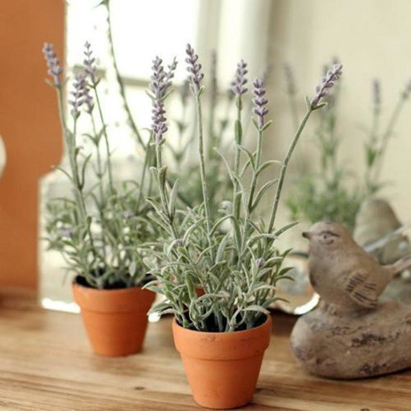 8 loại hoa thơm như nước hoa, trồng ban công đưa hương nức cả nhà-2