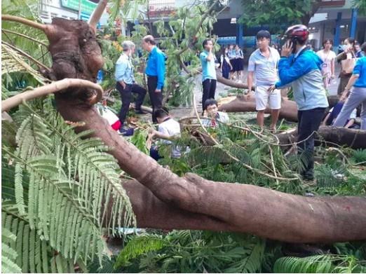 Bộ GD&ĐT yêu cầu các nhà trường khẩn trương kiểm tra, cắt tỉa cây xanh trong trường học-1