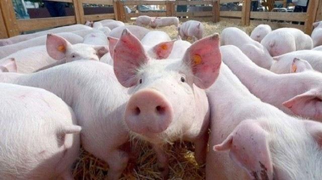 Giá thịt lợn bị thổi lên gần 300.000 đồng/kg, người dân sợ, tiểu thương khóc ròng-2