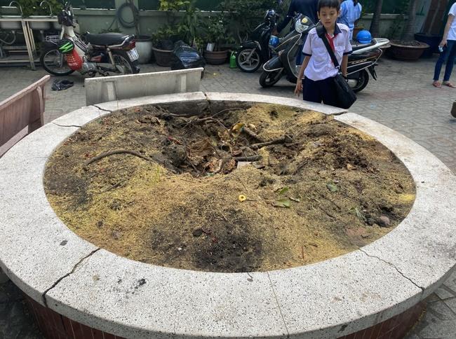 Hiệu trưởng THCS Bạch Đằng quyết định cho học sinh đi học ngay sau sự cố cây phượng đổ: Phụ huynh lo lắng nhưng tin vào trường-1