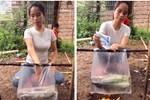 Cô gái nấu cá bằng... túi nilon cực điệu nghệ, dân mạng xem xong tròn mặt ngạc nhiên mà chẳng lý giải nổi tại sao