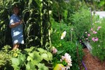 Ngỡ ngàng với khu vườn 300m2 đẹp như tiên cảnh giữa TP Cần Thơ-11