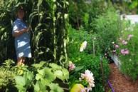 Ngôi nhà nhỏ với khu vườn đầy nắng và cuộc sống bình yên của gia đình 7 người ở ngoại ô thành phố