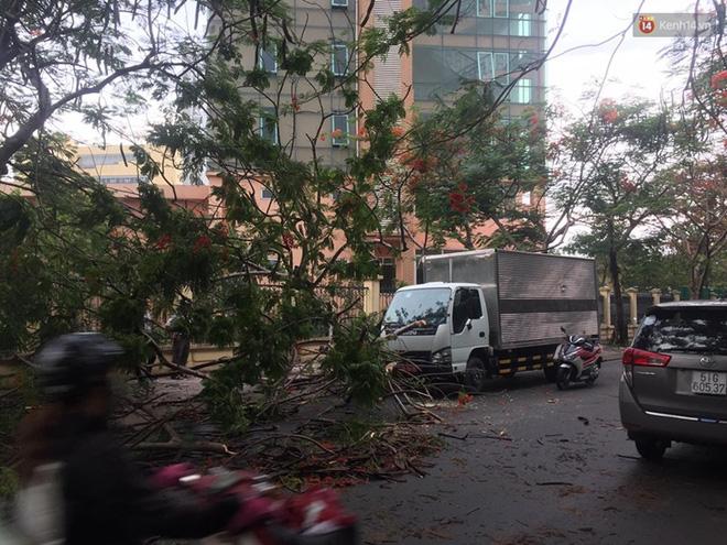 Thêm một cây phượng gần trường Đại học ở Sài Gòn bật gốc đè trúng xe tải, nhiều người đi đường hoảng hồn-2